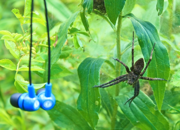 Spider and my ear phones.
